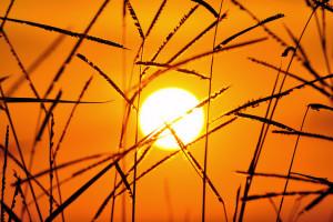 Desarrollo sostenible y cambio climático</h4>                 </div>