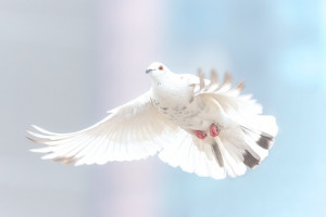 Hablemos sobre la paz